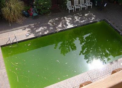 agua verde en la piscina piscinas code
