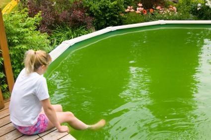 C mo prevenir las algas en la piscina piscinas code for Como se hace una pileta de natacion de material