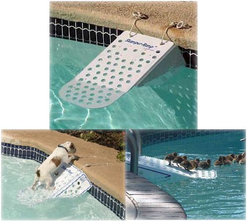 La rampa para piscina de tu mascota piscinas code for Piscinas plastico duro