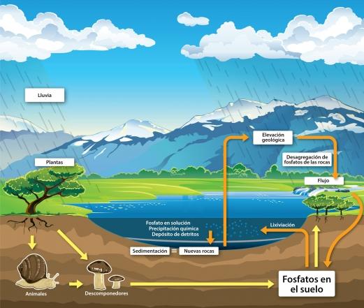 De dónde vienen los fosfatos